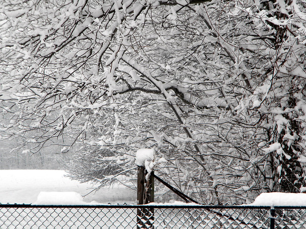Winter in the country.<br /> <br /> Photographer's Name: Rita Drews<br /> Photographer's City and State: Anderson, Ind.