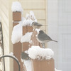 A chickadee and juncos waiting for a turn at the bird feeder.<br /> <br /> Photographer's Name: H.A.  Pease<br /> Photographer's City and State: Anderson, Ind.