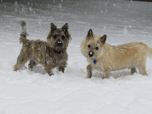 Winston and Jackson in the snowstorm aftermath.<br /> <br /> Photographer's Name: Lisa Findley<br /> Photographer's City and State: Pendleton, Ind.