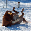 A break from the frigid temperatures means time to play in the snow!<br /> <br /> Photographer's Name: Amber Ryder<br /> Photographer's City and State: Daleville, Ind.