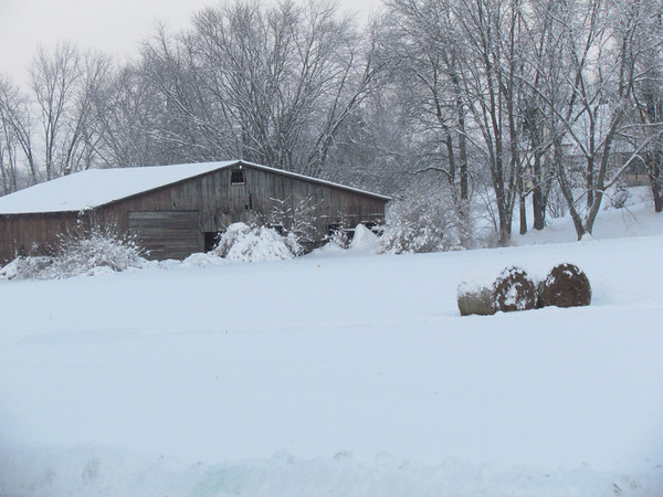 Hay rolls in the snow.<br /> <br /> Photographer's Name: Brian Fox<br /> Photographer's City and State: Anderson, Ind.