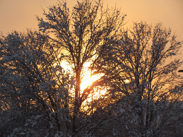 Sunset in a snowy tree.<br /> <br /> Photographer's Name: Brian Fox<br /> Photographer's City and State: Anderson, Ind.