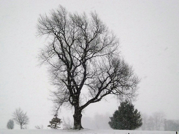 """""""January in Indiana"""" in Richland Township.<br /> <br /> Photographer's Name: J.R. Rosencrans<br /> Photographer's City and State: Alexandria, Ind."""