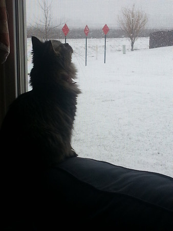 Malie's first snow.<br /> <br /> Photographer's Name: Yolanda Stinson<br /> Photographer's City and State: Anderson, Ind.