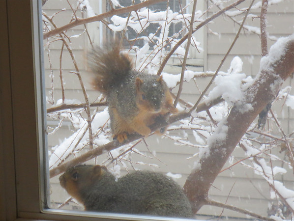 We had visitors during the snowstorm.<br /> <br /> Photographer's Name: Andy Knight<br /> Photographer's City and State: Anderson, Ind.