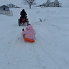 Sledding in the January snow.<br /> <br /> Photographer's Name: Karen McCord<br /> Photographer's City and State: Frankton, Ind.