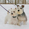 Snow puppies waiting to play in the snow.<br /> <br /> Photographer's Name: Hannah Davis<br /> Photographer's City and State: Alexandria, Ind.