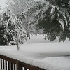 Front yard.<br /> <br /> Photographer's Name: Rachael Ginder<br /> Photographer's City and State: Anderson, Ind.