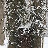 Winter wood<br /> <br /> Photographer's Name: Rachel Landers<br /> Photographer's City and State: Anderson, Ind.