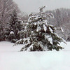 An Evergreen, in Art Tate's yard, at CrownPointe, strains under the weight of Friday night's heavy snowfall.<br /> <br /> Photographer's Name: Art Tate<br /> Photographer's City and State: Anderson, IN