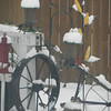 This snow has made these birds very hungry in Frankton!<br /> <br /> Photographer's Name: Diana Adams<br /> Photographer's City and State: Frankton, IN