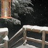 A snowy night<br /> <br /> Photographer's Name: Barbara Richardson<br /> Photographer's City and State: Alexandria, IN