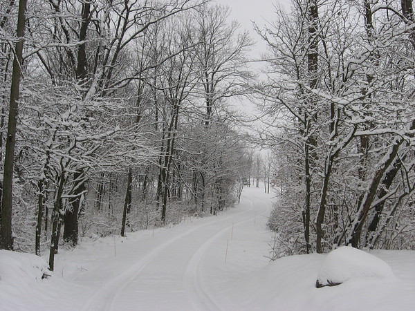 The driveway to my house<br /> <br /> Photographer's Name: Christie Hartman<br /> Photographer's City and State: Alexandria, IN