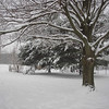 Photographer's Name: Susan Humphrey<br /> Photographer's City and State: Anderson, IN