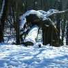 it might have been his imagination, but Art Tate thinks he saw a Snow Dragon, crawling over a log at Mounds State Park.<br /> <br /> Photographer's Name: Art  Tate<br /> Photographer's City and State: Anderson, IN