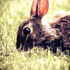 Munchy Bunny<br /> <br /> Photographer's Name: Brittany Brock-Campagna<br /> Photographer's City and State: Mankato, MN