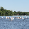 Photographer's Name: Dena Braun<br /> Photographer's City and State: Madison Lake, MN