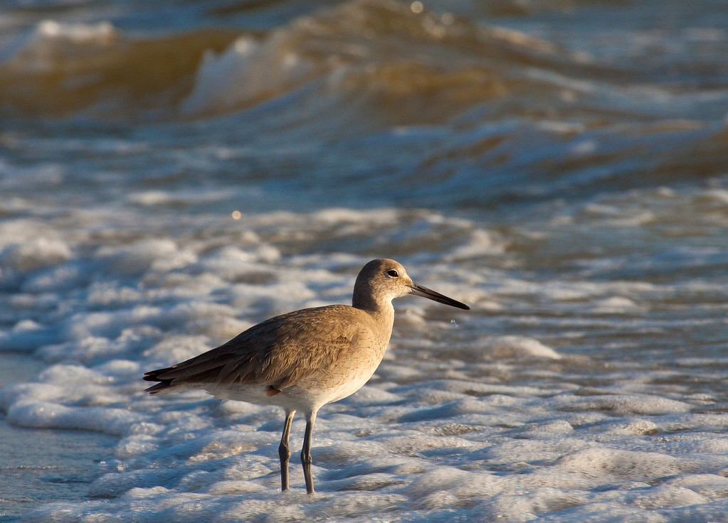 "Willet<br /> <br /> 20""x26"" Framed and signed archival print<br /> $275"