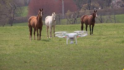 Mr. Drone meets Horses!