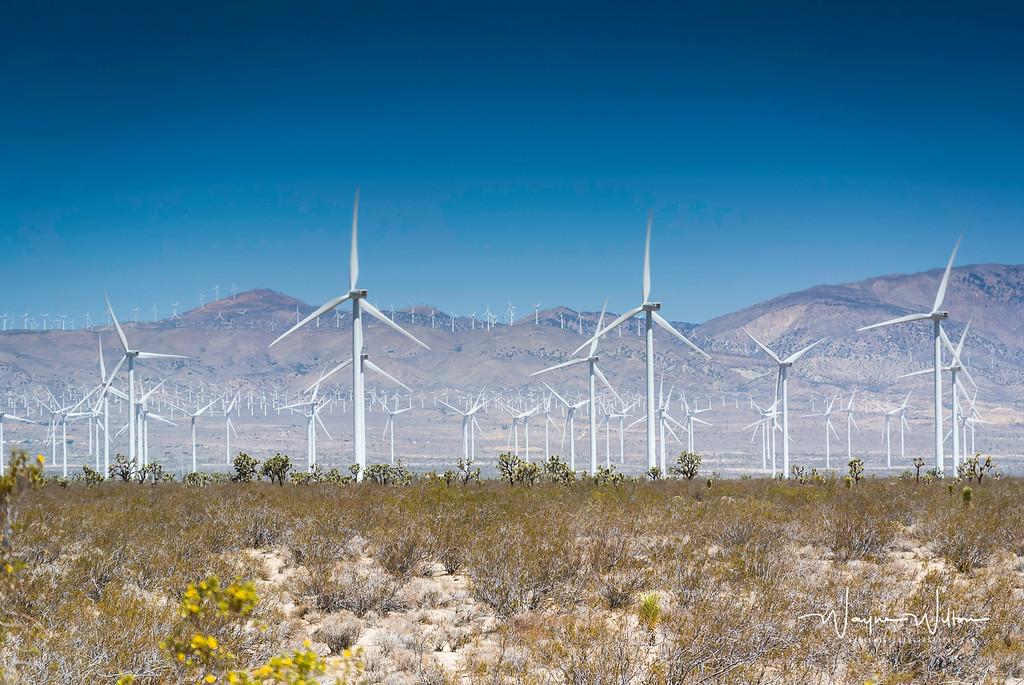 Wind Turbines in CA