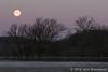 Swamp moon