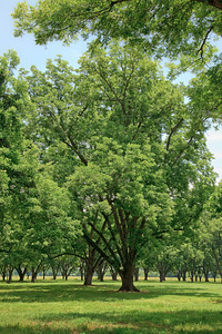 Pecan Grove, Hill, Arkansas