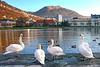 Byfugler i Bergen