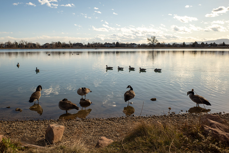 Ducks in a row, Geese in a gaggle