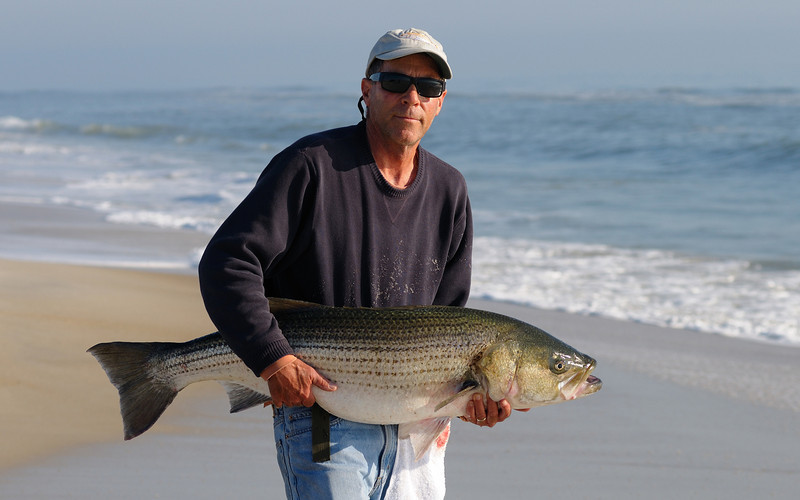 11/9/09 first striper of the fall season for me, it was a great fish on lighter tackle and reel, almost got spooled......gotta go clean it now....