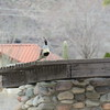 A Gambel's quail on the trailhead sign's roof.