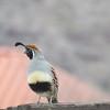The quail up close.