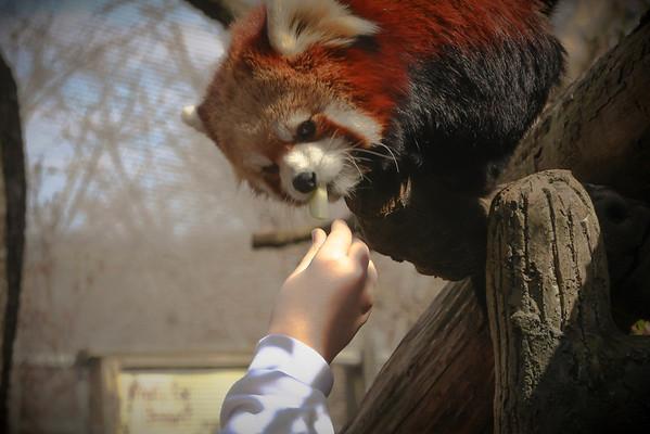 Red Panda Exhibit
