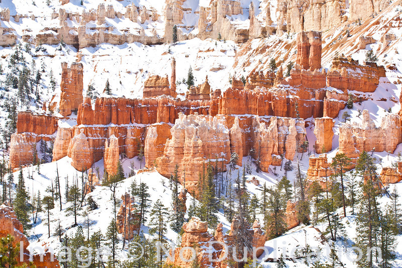 Snowy Towers, Bryce Canyon National Park