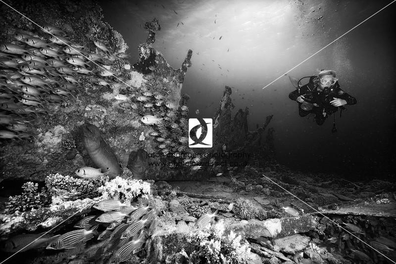 0020Red-Sea-Photographs-Jason-Chambers
