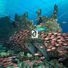 0017Red-Sea-Photographs-Jason-Chambers