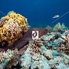 0023Red-Sea-Photographs-Jason-Chambers