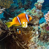 0007Red-Sea-Photographs-Jason-Chambers