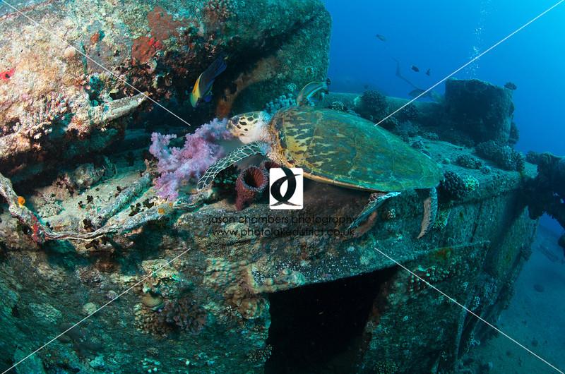 0050Red-Sea-Photographs-Jason-Chambers