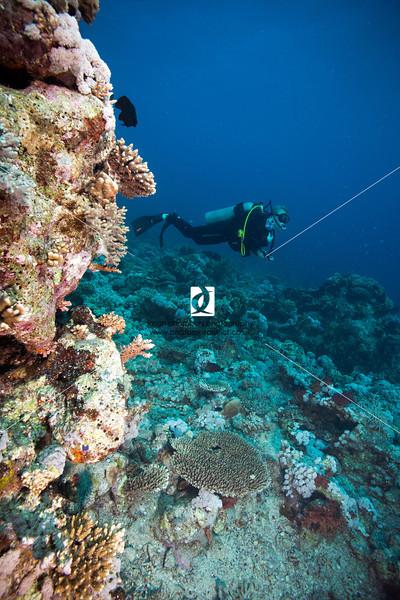 0033Red-Sea-Photographs-Jason-Chambers