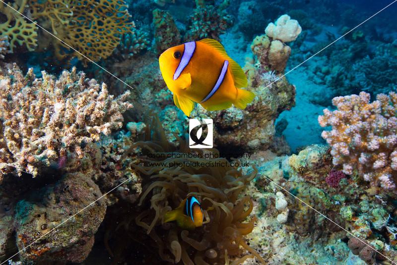 0006Red-Sea-Photographs-Jason-Chambers