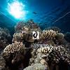 0008Red-Sea-Photographs-Jason-Chambers