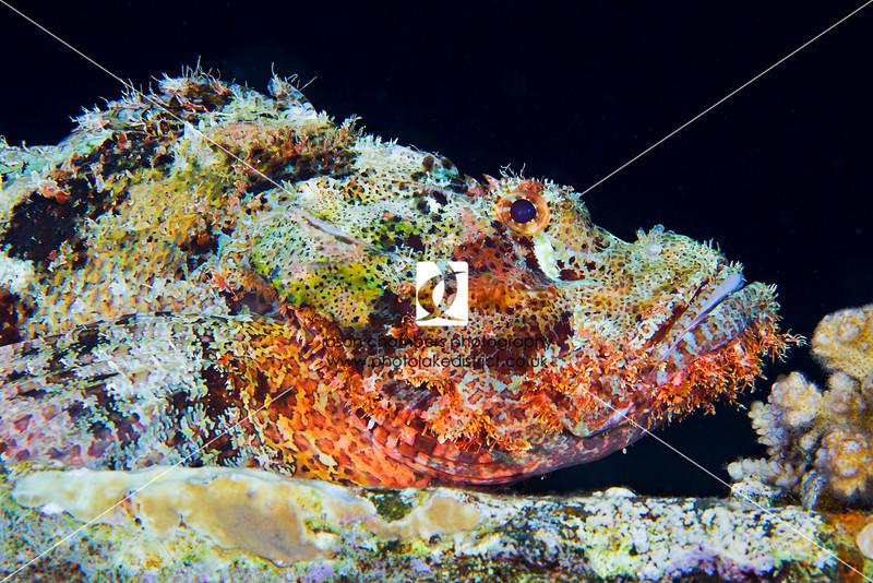 0010Red-Sea-Photographs-Jason-Chambers