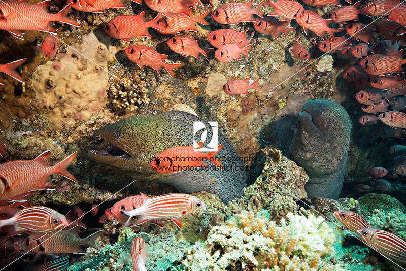 0027Red-Sea-Photographs-Jason-Chambers
