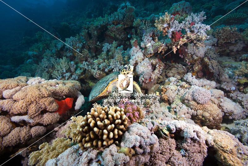 0034Red-Sea-Photographs-Jason-Chambers