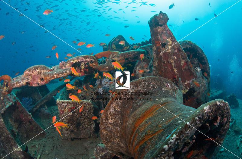 0048Red-Sea-Photographs-Jason-Chambers