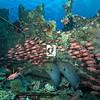 0016Red-Sea-Photographs-Jason-Chambers