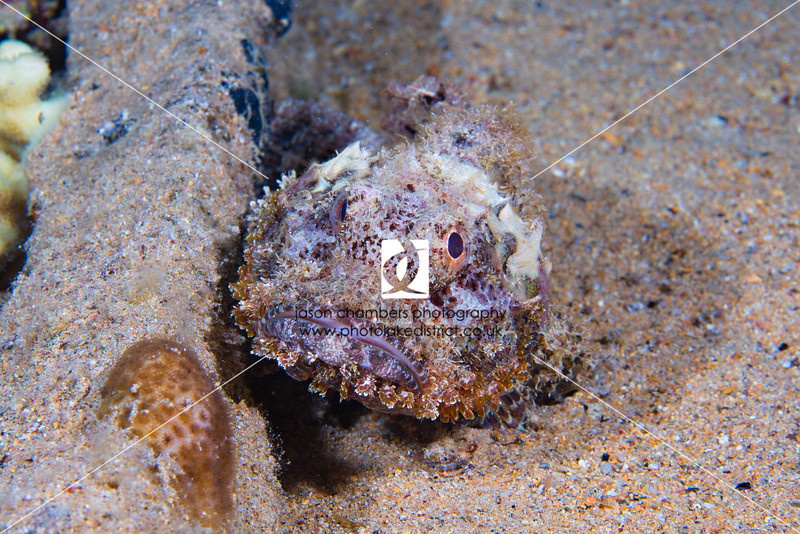 0011Red-Sea-Photographs-Jason-Chambers