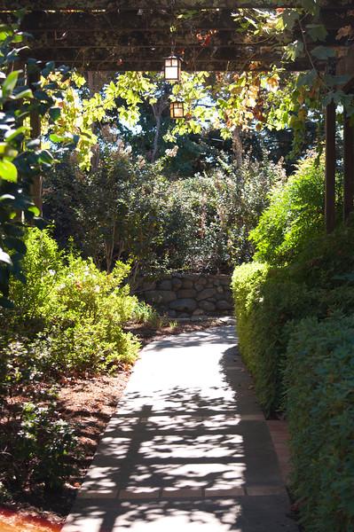 Walkway at ZD Vineyards