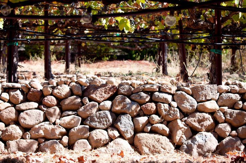 Front vineyards and a wall at ZD Vineyards
