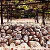 Front vineyards and a wall at ZD Vineyards